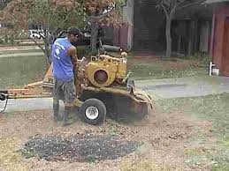 removal of a tree stump
